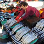 Korea 2010 Busan Fishmarket 08 150x150 The People and Produce of Jagalchi Fish Market in Busan
