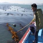 Korea 2010 Kelp 002 150x150 Busan Seaweed Farm Visit